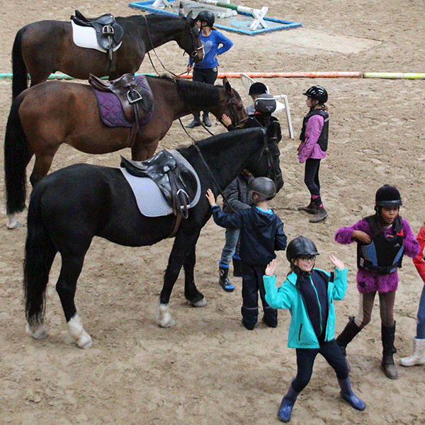 Galerie_fond_equitation